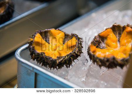 Fresh Sea Uni Urchin On Ice, Sell At Tsukiji, Japan Fish Market, Tokyo, Japan Raw Uni Urchin Sashimi