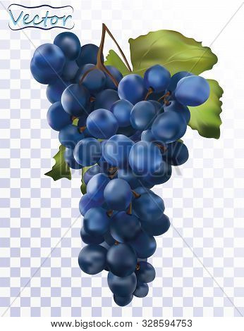 3d Realistic Dark Blue Grapes. Wine Grapes Isolated On Transparent Background. Table Grapes. Fresh F