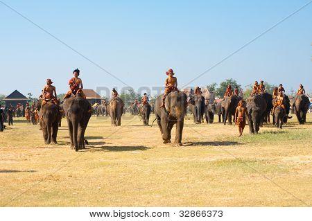 Herd Elephants Walking Field Spread
