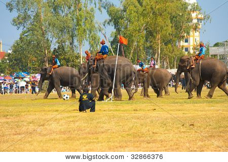 Group Elephants Playing Soccer