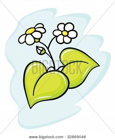 Beautiful flower a camomile