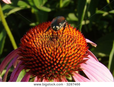 Bug On A Flower