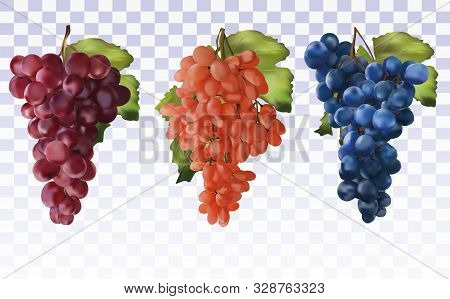 Wine Grapes. Collection Three Grapes Red, Dark Blue With Green Leaf. Healthy Fruits. Table Grapes. I