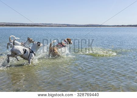 Dogs Playing In The Water Of A Lake During A Sunny Day