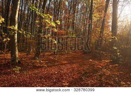 Autumn Forest Landscape Yellowed Foliage Of Trees In The Sunset Light