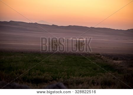 poster of Sunset meadow field plants view. Sunset grass silhouette. Sunset field grass. Sunset field plants view