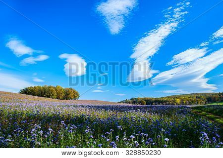 Agriculture, Background, Beautiful, Bee, Beekeeping, Bloom, Blooming, Blue, Bud, Business, Colorful,