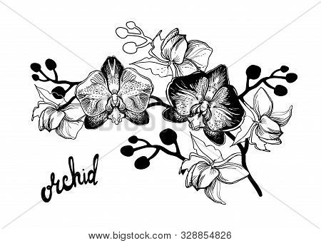 Black And White Hand Drawn Sketch With Spotty Orchids Flowers On White Background And Brush Pen Lett