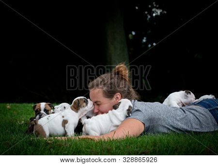 woman laying in the grass playing with a litter of English bulldog puppies