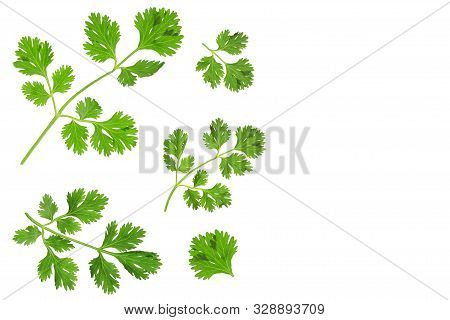 Cilantro Or Coriander Leaves Isolated On White Background With Copy Space For Your Text. Top View. F
