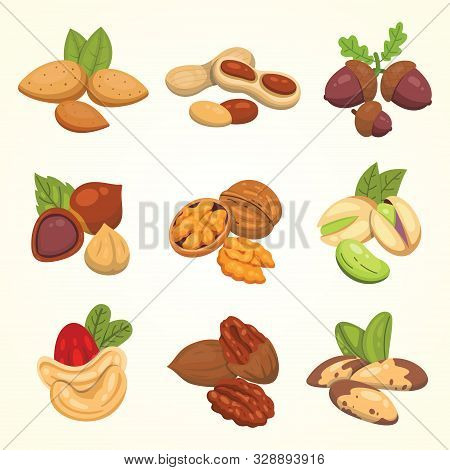 Set Vector Icons Nuts In Cartoon Style. Nut Food Collection. Peanut, Hazelnut, Pistachio, Cashew, Pe