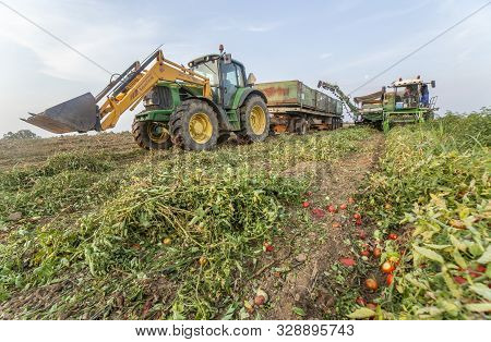 Badajoz, Spain - August 23th, 2018: Gondola Trailer Being Towed By Tractor With Tomato Harvester At