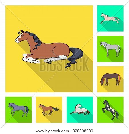 Vector Design Of Breed And Equestrian Sign. Collection Of Breed And Mare Stock Vector Illustration.