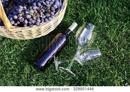 Bottle, Two Glasses Of Red Wine And Basket Of Fresh Grape Harvest On Lawn, Green Grass Outside. Home