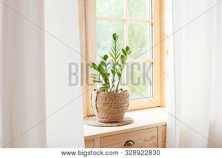 Zamioculcas Home Plant In Straw Pot Stands On Windowsill. Home Plants On The Windowsill. Concept Of