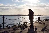an old man, silhouetted by the sun shining off lake ontario, feeds sea birds down by the docks. poster