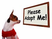 Please Adopt Me Sign Shows Stray Unwanted Canine poster