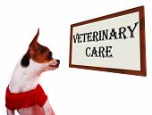 Veterinary Care Sign Shows Pet Clinic Or Hospital poster