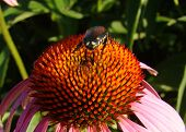 A beetle-like bug explores a glowing flower for tasty nectar or pollen. poster