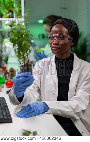 Woman Researcher Looking At Green Sapling Comparing With Tomato While Typing On Keyboard Ecology Exp