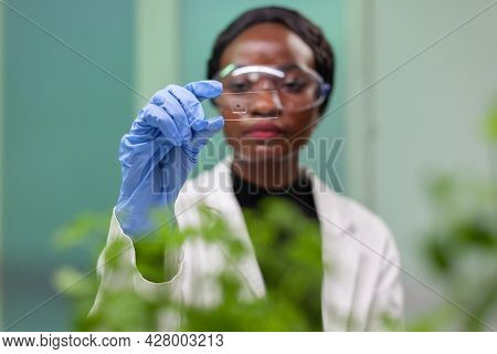 African Botanist Woman Looking At Genetic Test Sample For Biological Experiment. Pharmaceutical Scie