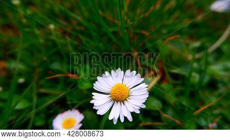 Bright White Flower With Yellow Pollen When Blossomed Looks Enchanting And Attract Anyone Who Pass B