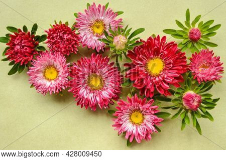 A Beautiful Composition For Greeting Cards Made Of Flowers-asters Or Daisies On Pale Old Green Paper