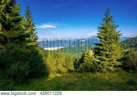 Coniferous Forest On The Mountain Hill. Beautiful Summer Nature Scenery In The Morning. Idyllic Natu