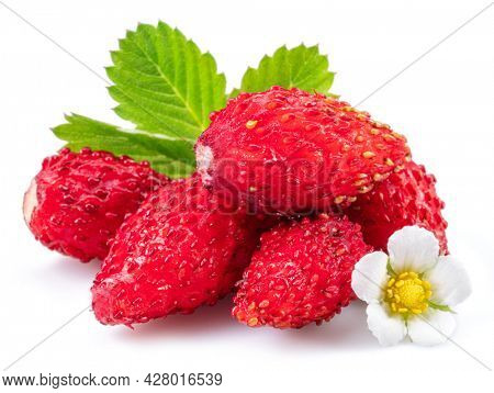 Ripe red wild strawberry with strawberries leaves isolated on white background.