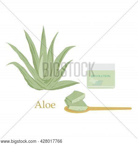Medicinal Herbs. Aloe Vera. Cosmetics. Cosmetic For Face .jar Of Cosmetic Cream