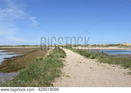 Hiking Path Over Tidal Marsh And Wetlands.