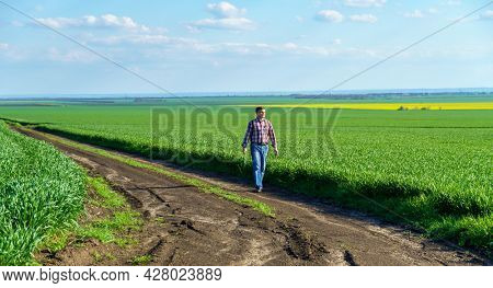 a man as a farmer walking along the field, dressed in a plaid shirt and jeans, checks and inspects young sprouts crops of wheat, barley or rye, or other cereals, a concept of agriculture and agronomy
