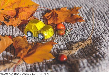 Autumnal Background. Yelllow Toy Car And Dried Orange Fall Maple Leaves On Grey Knitted Sweater. Tha