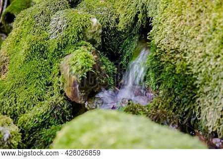 Mountain Spring Water From Which A Forest Stream Originates, Drinking Water