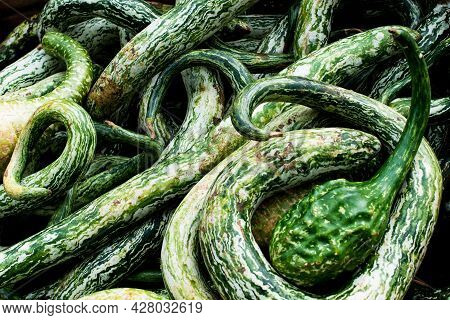 Close Up Of A Selection Of Snake Gourds