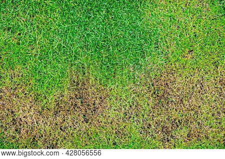 The Texture Of Dead Grass Top View Nature Background Texture Green And Yellow Grass Texture The Lack