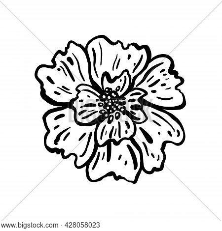 Flower Head. Hand Drawn Vector Illustration. Monochrome Black And White Ink Sketch. Line Art. Isolat