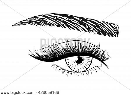 Woman's Sexy Eye With Eyebrow And Full Lashes. Idea For Business Visit Card, Typography. Logo For Br