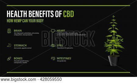 Benefits Of Cbd For Your Body, Black Poster With Infographic And Bush Of Cannabis In Pot. Health Ben