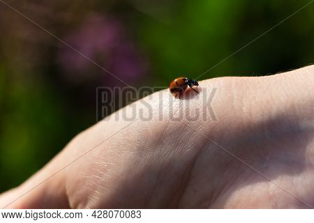 A Ladybug Is Crawling On A Hand On A Blurred Green Background. Small Ladybug On The Skin.