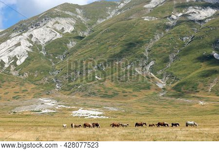 Group Of Horses In The Wild Grazing Undisturbed In The Boundless Prairie In Summer