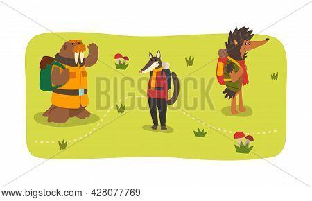 Animals Hiking On Summer Holidays Set, Sea Lion, Badger, Hedgehog Characters Camping, Hiking Vector