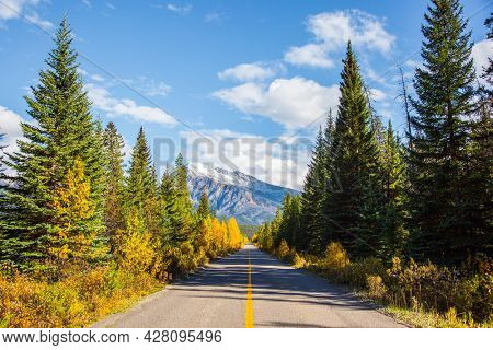The famous Highway 93 in the Rocky Mountains of Canada. Asphalt road among coniferous forests and orange aspens.