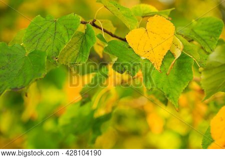 Autumn Leaves Of Yellow Color Adorn The Beautiful Nature Bokeh Background. Beautiful Nature Backgrou
