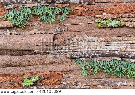 Wood Background And Texture. Natural Pattern And Wallpaper With Plant.