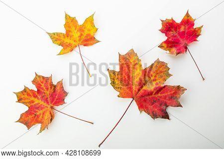 Autumnal Orange Leaves. Leaf Isolated On White Background.