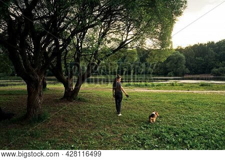 Woman With Dreadlocks Walk With Dog Corgi.