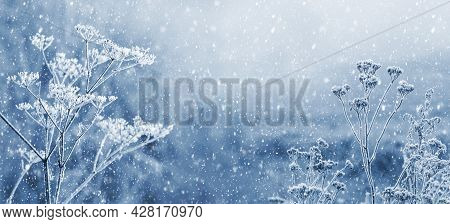 Snowfall In Winter Forest. Snow-covered Dry Plants On A Blurred Background Under The Snowfall. Merry