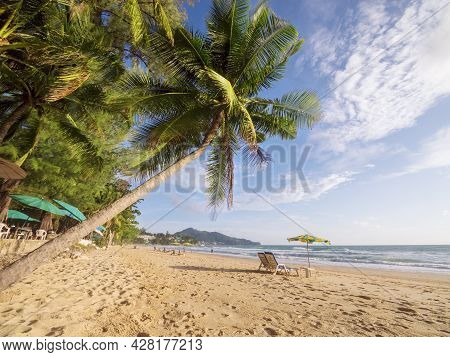 Coconut Palm Tree On White Sandy Beach In Phuket Thailand. Travel Concept Coconut Palm Trees With Be