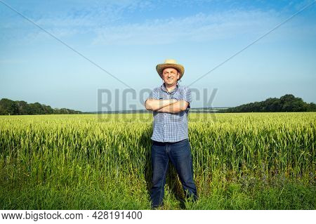 Farmer Standing In A Wheat Field Examining The Harvest On A Sunny Day. Plantation Care Idea.